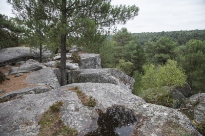fontainebleau-726845_1280__1_.jpg